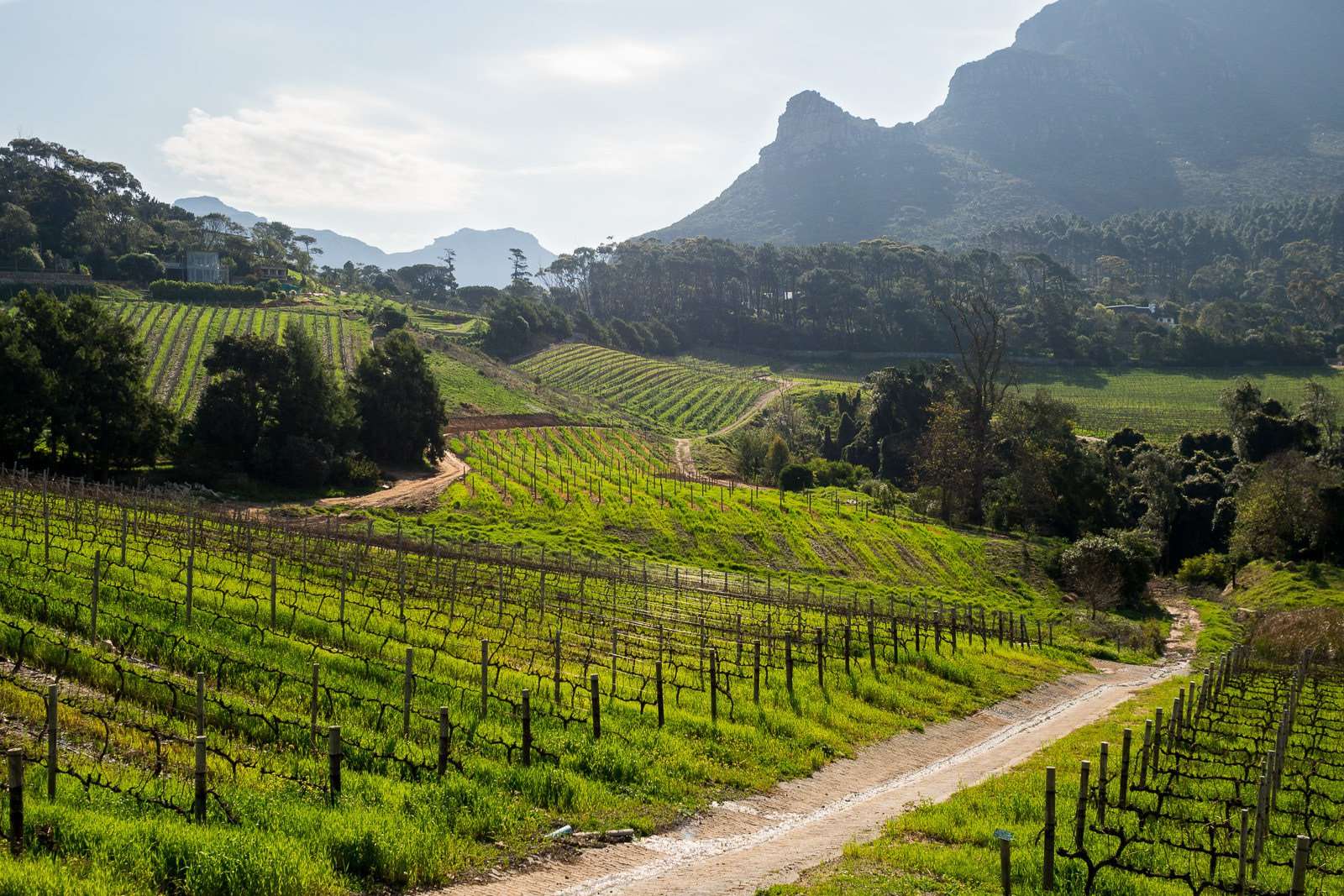Cape Town South Africa vineyards