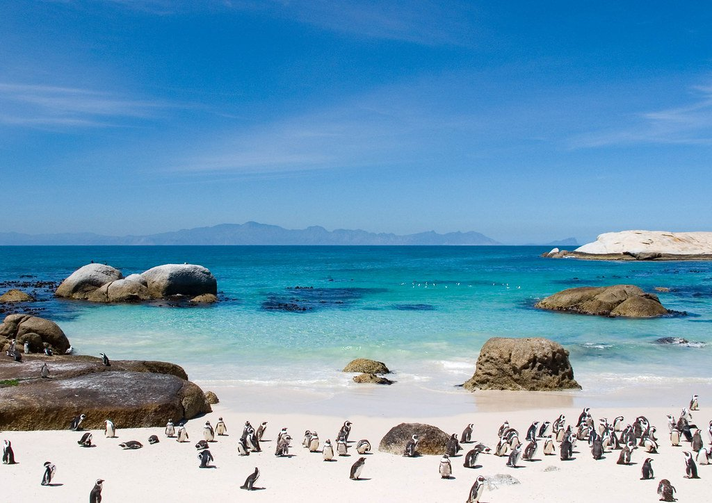 Boulders Beach Cape Town South Africa