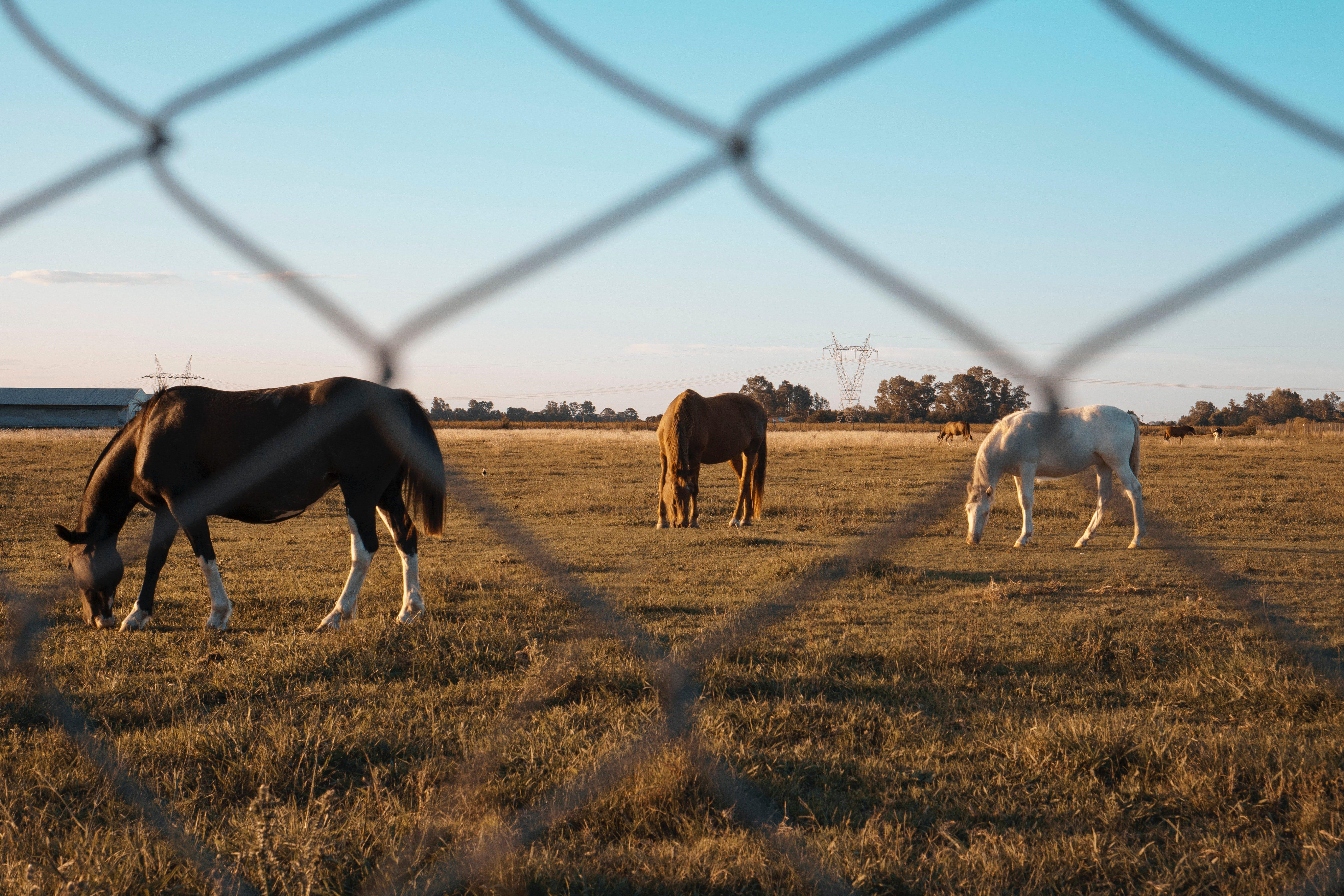 Ranch- Buenos Aires
