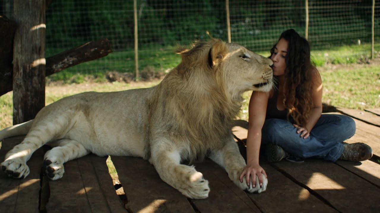 Pet Lion Travel Story
